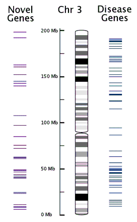 The dna sequence annotation and analysis of human chromosome 3 ccuart Image collections